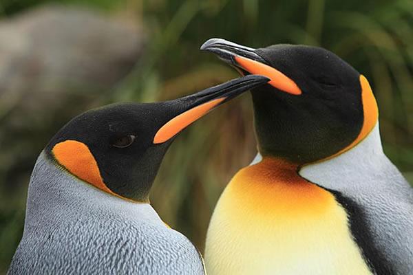 A Pingvinkirály 3D